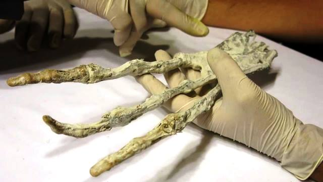 alien-claw