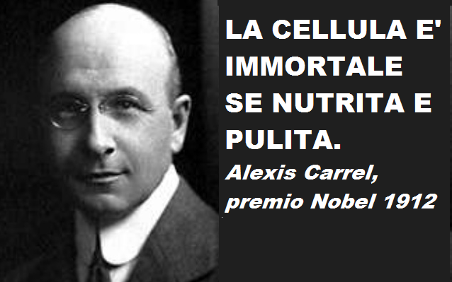 alexis-carrel.png