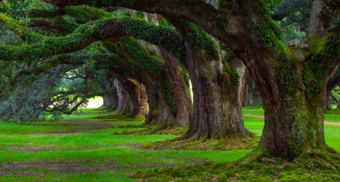festa-degli-alberi-900x483